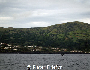 Spermwhale near Pico island Azoren by Pieter Firlefyn