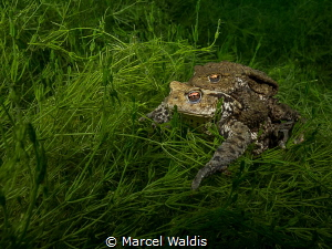 Quak 