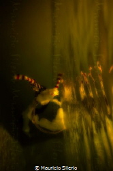 this picture it had been taken in a swimming pool just wi... by Mauricio Silerio