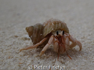 Hermit crab by Pieter Firlefyn