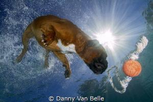 De Floeren in for a swim ! by Danny Van Belle
