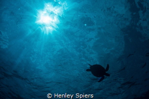 Turtle & Sunball by Henley Spiers