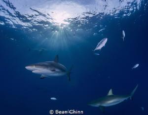 Sunrise Sharks by Sean Chinn