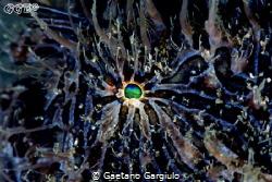 Blue... the blue hue is almost natural, just enhanced a b... by Gaetano Gargiulo