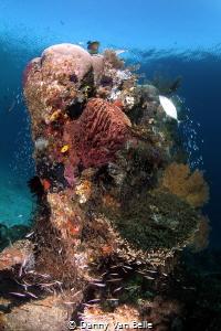 The reefs of Rajah Ampat 2 by Danny Van Belle