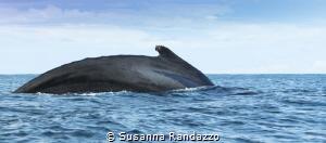 whale watch , El Choco _Colombia by Susanna Randazzo
