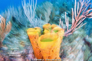 """Reef Art"" - No Photoshop.  Photographed using a slow shu... by Susannah H. Snowden-Smith"