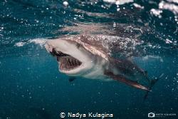 The bait by Nadya Kulagina