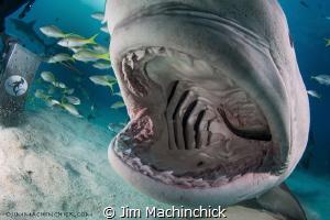 The bite shot...translates into: dome port polishing afte... by Jim Machinchick
