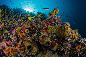 ~ Rainbow Nation ~  The reefs in Cape Town is teaming w... by Geo Cloete