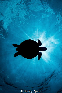 Turtle Sunburst by Henley Spiers