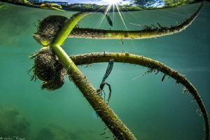 dragonfly (Lez river) by Mathieu Foulquié