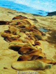"""Seal Pile"" by Alison Ranheim"