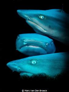 sharkface by Marc Van Den Broeck