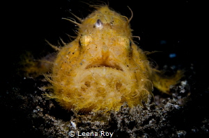 Frogfish by Leena Roy