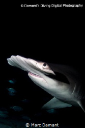 A passer by in the dark! A nite dive turns into a frantic... by Marc Damant