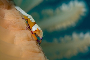 The Emperor's pen