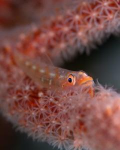 Fluffy fishy by James Deverich
