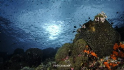 Landscape Silver Tower Dive Site at South Bolaang Mongond... by Melriansyah Df