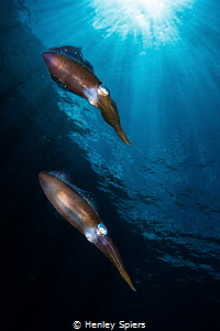 Squid City by Henley Spiers