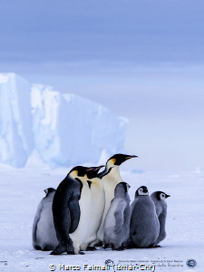 "The ""Emperor family"" on sea-ice (Terranova bay, Ross Se... by Marco Faimali (ismar-Cnr)"