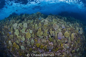 """""""The Meadow"""" The bluff wall in Pedro's Bay is literally ... by Chase Darnell"""