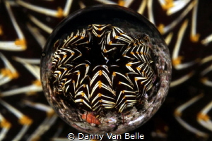 Creative picture of a featherstar by Danny Van Belle