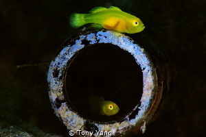 Insider and Outsider by Tony Yang