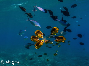 a lunch in the Red Sea ,  with magic filter Nikon D7100 T... by Eda Çıngı