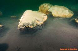 "Poland, small lake in Cracow ZAKRZOWEK ""Stone shell"" by Olgierd Graca"