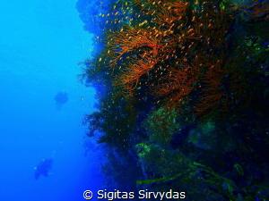 Drop Off diving by Sigitas Sirvydas