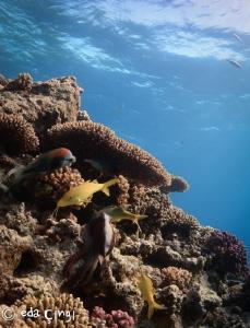 red sea coral reef animal life (magic filter and manuel w... by Eda Çıngı