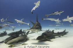 Amazing time with the great hammerhead by Matias P Alexandro