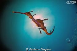 Dragon sun-backing... to take this shot I had to lay myse... by Gaetano Gargiulo