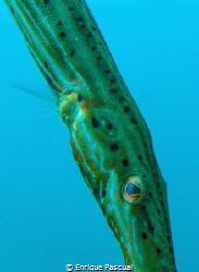 Trompet fish look by Enrique Pascual