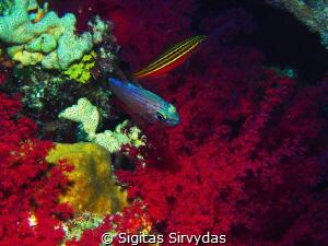 Reefs at night by Sigitas Sirvydas