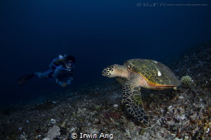 23rd May 2016 Hey, talk to me..  It's World Turtle Day!... by Irwin Ang