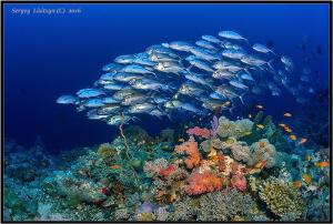 Fish. by Sergey Lisitsyn