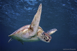 Happy Day Turtle by Iyad Suleyman
