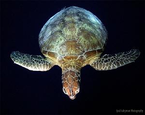 Turtle Day by Iyad Suleyman