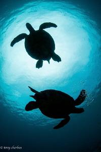 Happy World Turtle Day! Honu Silhouettes in Kauai, Hawaii by Tony Cherbas