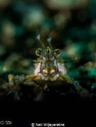 Shrimp up close and personal by Neil Wijayaratne
