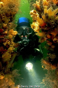 Looking around in the tunicates of the green waters of Ho... by Danny Van Belle