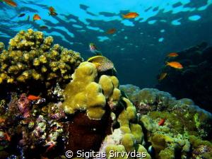 Colorful coral reef in Red sea by Sigitas Sirvydas