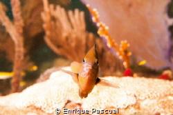 Close encounter by Enrique Pascual