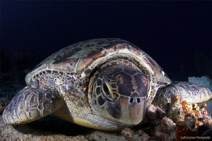 I'm going to post 27 different shots of turtles to make... by Iyad Suleyman