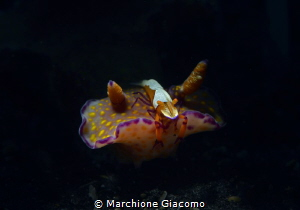 Imperor and nudibranche