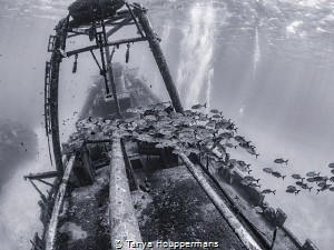 'Rush Hour On The Kittiwake' - Fish schooling over the wr... by Tanya Houppermans