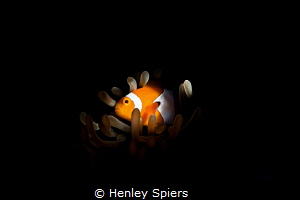 Nemo is a real fish by Henley Spiers