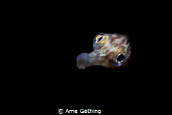 ~ Into the light ~ Taken on Photographers reef in False ... by Arne Gething